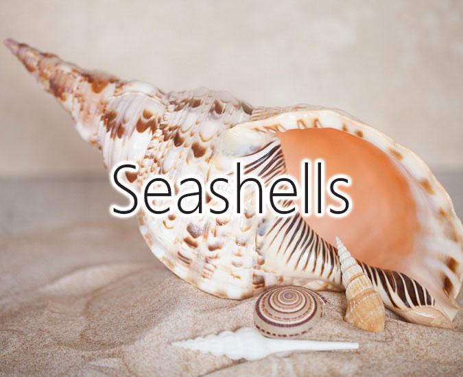 The Seashell Company